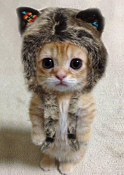 cat-in-a-hat-2